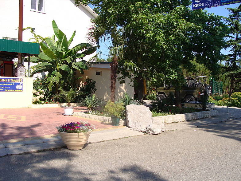 Банановая пальма в курортном городке Адлера