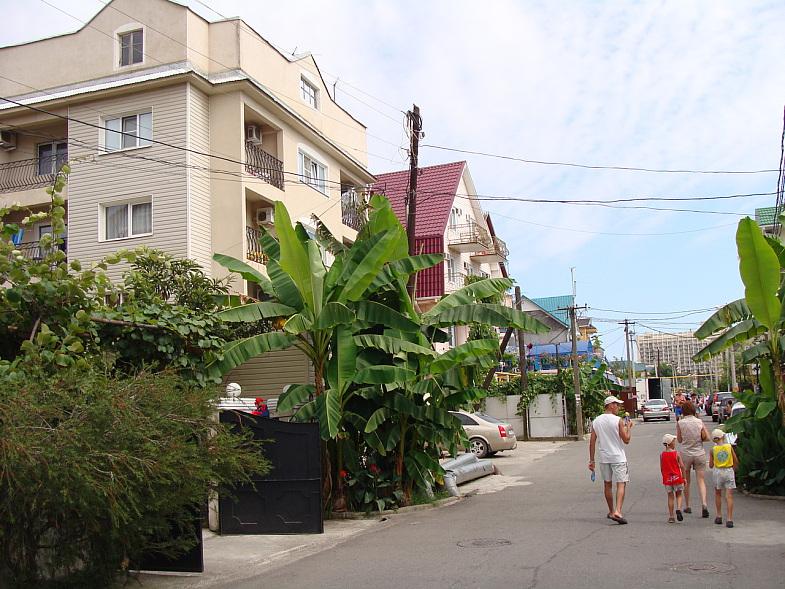 Банановая пальма на улице Просвещения в Адлере